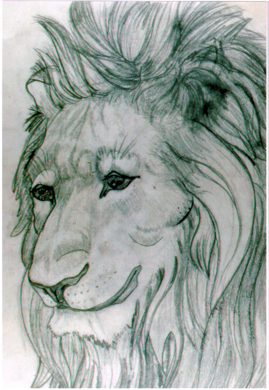 Lee Franclemont, study of lion, 1960s, charcoal on paper. Photo credit John FN Franclemont.